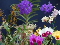 Annual Orchid Show and Sale