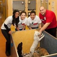 NIU Cares Day