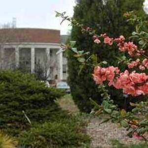 Guided Walk of 2014 Spring Plant Sale Highlights