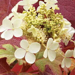 2014 UD Botanic Gardens Annual Benefit Plant Sale