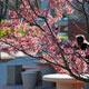 Undergraduate and Graduate Spring Recess