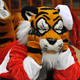 Holiday ROAR 2017