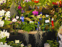 Oregon Orchid Show & Sale