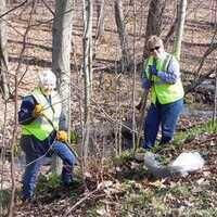 Take Back the Woods: Battling Invasive Species