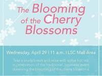 The Blooming of the Cherry Blossom