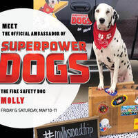 Meet Molly the Fire Safety Dog, Superpower Dogs Ambassador