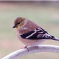 Bird Walk and eBird Workshop - DCNR Calendar of Events
