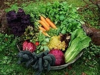 Race and the Food System