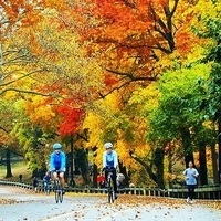 Biking in Central Park