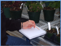 Sketching in the Greenhouse