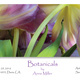 "Anne Miller ""Botanicals"" at Gallery 1855"