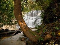 Fall Creek Gorge Tour