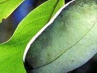 Fall Propagation of Fruit & Nut Trees