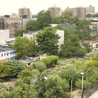 Book Talk - Beyond the Kale: Urban Agriculture and Social Justice Activism in New York City