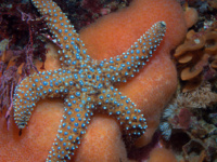 Seats available in EEMB2700 Marine Biology this Spring!