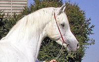Palmetto Sport Horse Spring Classic