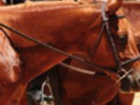 SCQHA Horse Show