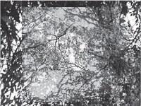 "Venvi Art Gallery Presents ""Continuum"" by Mary Stewart"