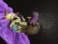 Hap-bee hour talk: Bee-havior & Floral Rewards