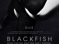 Blackfish Documentary Screening