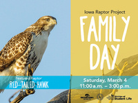 March Family Day at Iowa Raptor Project: Red-tailed Hawk