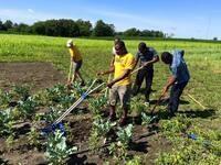 Johnson County Historic Poor Farm—New Collaborations
