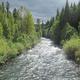 Mindfulness Day Hike on McKenzie River Trail