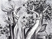 "Valerie Cohen: ""Tree Lines"""