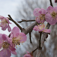 Small Flowering Trees Lecture & Lab Series
