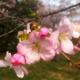 Hiroshima Green Legacy: Spring Thaw
