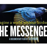 2017 Green Films: The Messenger