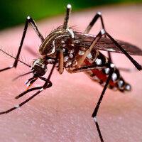 Northwest Florida Mosquito Control Workshop