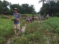 System of Rice Intensification: The Peace Corps Experience