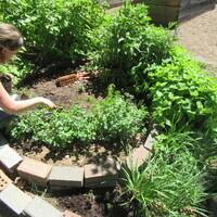 Garden Commons Summer Workdays