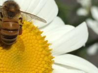 Happy Hour with Beekeepers + Honey Tasting