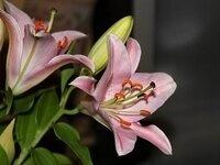 Diggin' and Splittin' Perennials: Gardening Demonstration