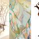 RISD/RI Alumni Show Reception & Artist Talk: Heart of a Tree