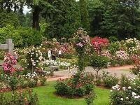 International Rose Test Garden Centennial Celebration