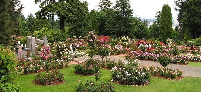 international rose test garden centennial celebration - Portland Rose Garden
