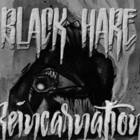 Black Hare