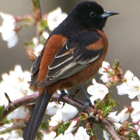 Guided Birding Tours