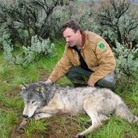 Wolf Talk: Oregon's Wolf Management Story—the Fun, the Sad, and the Fascinating