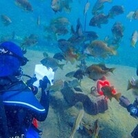 Introduction to Scientific Diving