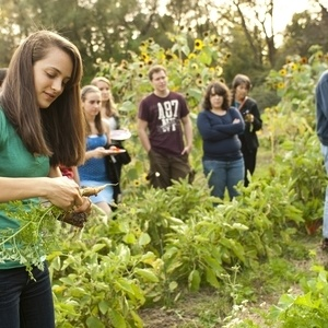 Colgate Community Garden Open Volunteer Hours