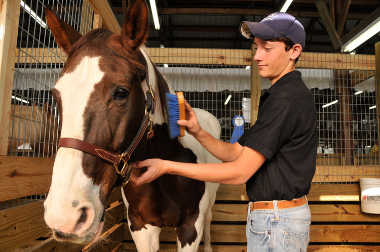Clemson Master Equine Manager Certification