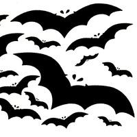 Bat Presentation