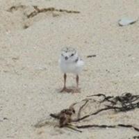 Presentation: Birds on Beaches