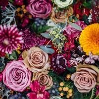 Bloom: A Senior Recital