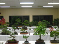 Fourth Annual Bonsai Show, Exhibit & Marketplace