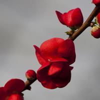 2013 UD Botanic Gardens Benefit Plant Sale Preview